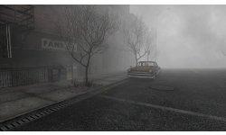 alchemilla rue