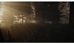 Forest DeadStewardess noscale