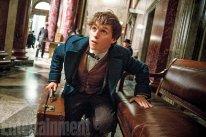 Les Animaux Fantastiques 04 11 2015 pic 2