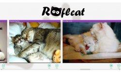 RoflCat (1)
