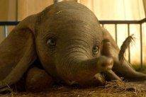 Dumbo Critique Avis Impressions cinema film images (3)