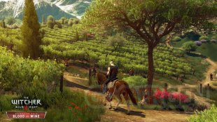 EN The Witcher 3 Wild Hunt Blood and Wine Vineyards vineyards everywhere